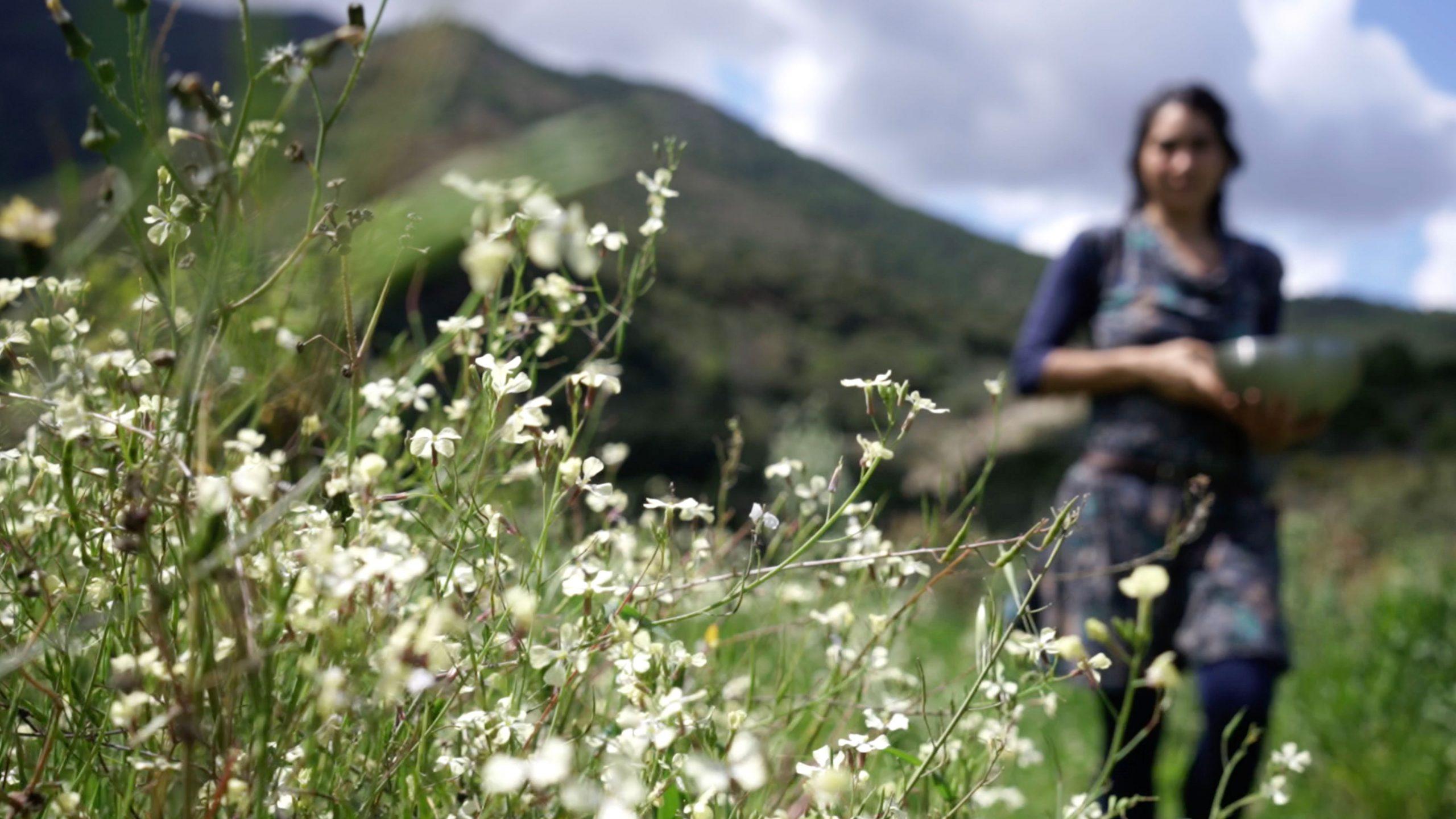 permacultura y plantas medicinales